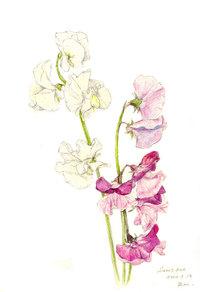宮崎県の花といえば・・・