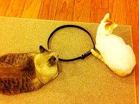 「猫転送装置」我が家でも実験してみましたよ~結果は??