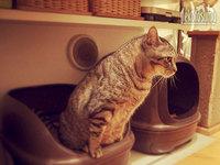 猫トイレの場所や掃除回数、みなさんどんな感じ?