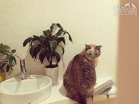 なぜか今、人間様のトイレがマイブームらしいグレコ・ローマンスタイル君