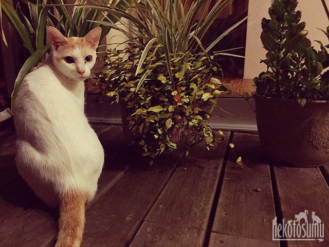 夜中に中庭でくつろぐ、ギズモ姫