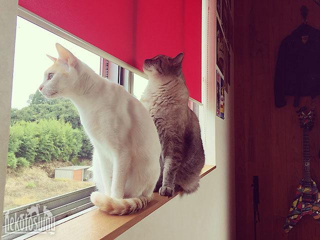 窓辺のギズモとグレコ
