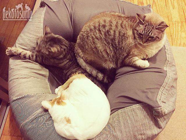 MUJI、猫もダメになるソファ(猫だまり)