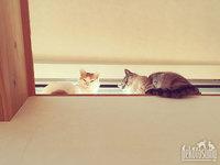 猫バンバン、ホログラムステッカー当たっちゃいました