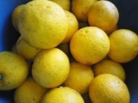 「レモンジャム☆」