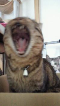 我が家の猫の紹介~その2~