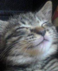 我が家の猫の紹介~その3~
