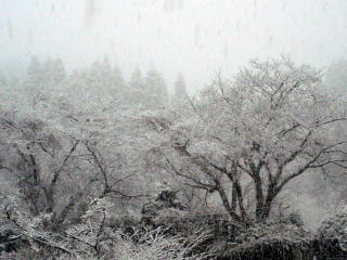 雪で見えなくなっていく・・・