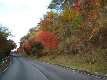 大規模林道
