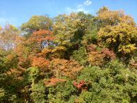 五ヶ瀬の紅葉