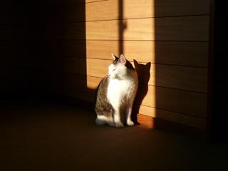 ネコ写真の締め切り