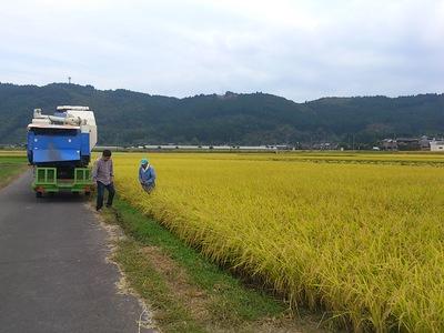 契約農家吉田さんの新米入荷しました