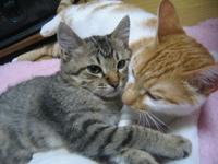 5匹目の猫  レオ君