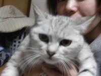 グレーの猫ちゃん