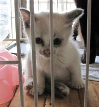 子猫の里親さん募集します