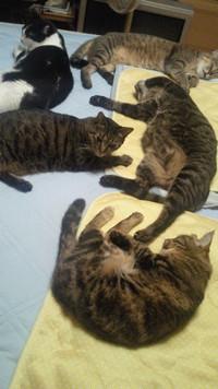 ここは僕たち、私たちの寝床ニャ