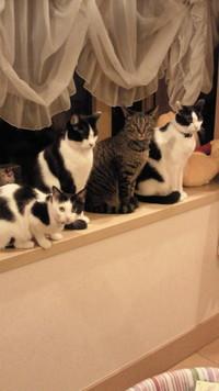 タマタマのついた猫