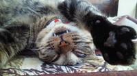 猫ヘルパー合格?