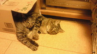 たまには我が家の猫のことも。。。