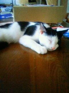 忠猫 ミミ