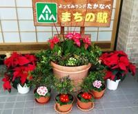 花コン! 2017/12/04 17:01:06