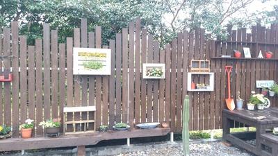 アトリエに「サボテン」植えました。