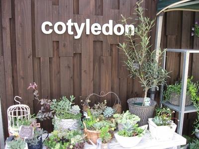 本日「cotyledon1周年記念WEEK」に出店します。