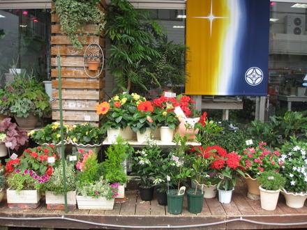 立花商店街 福岡生花店