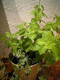 植物の力!?