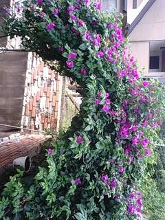 ★お庭の花★