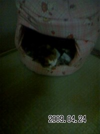 お気に入り猫ハウス