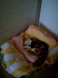猫ベッドのみーちゃん