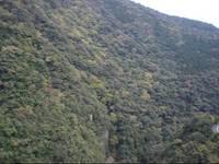 綾町照葉樹林と照葉大吊橋