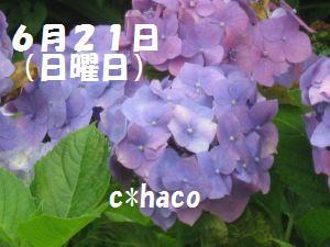 6月21日(日)C*haco