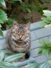 謎の、子猫。とイチゴ…。