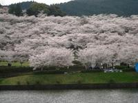 みまたん春祭り 2010/03/18 12:49:24