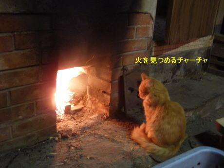 猫のチャーチャ