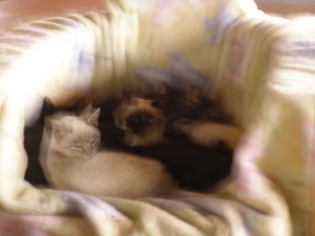 二輪舎の猫