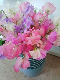 春咲くフリージアの花たち♪
