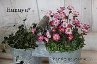 明日は日向日和です♪ 2012/03/19 10:45:42