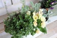 植物の植えかえ方・・私流2 2012/03/28 21:04:27