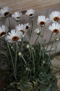 日向日和ありがとう♪いつも、ありがとう♪ 2012/03/21 10:15:04