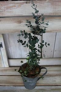 家の中でグリーンを育てよう♪ 2012/03/26 18:40:15