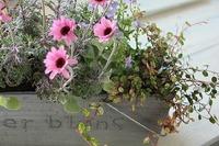 春の寄せ植えの作り方 実践編♪ 2012/04/11 09:21:54
