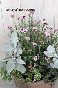植え込み 初夏の花
