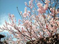 高鍋で春を感じる写真WS!