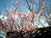 高鍋で春を感じる写真WS・3!