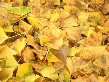 秋を感じる文化公園でのWS!