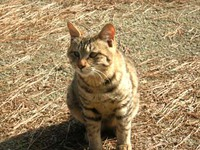 ネコ好きの写真WS・2!