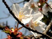 春を感じる写真WS・3!